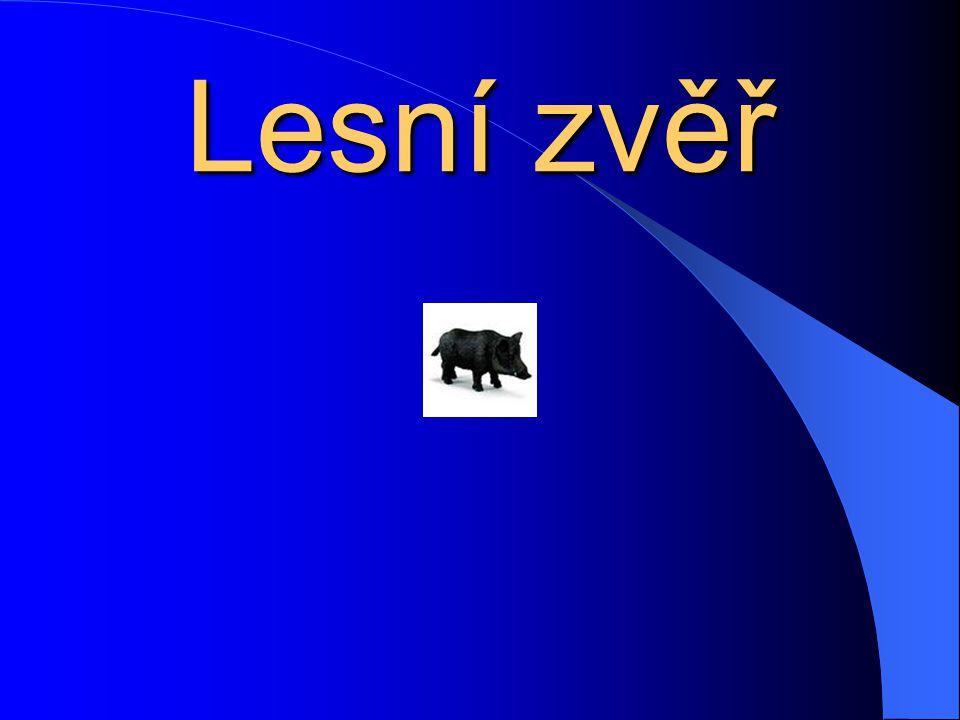 Veverka obecná Veverku je možné potkat celkem často, a tak by mohlo překvapit, že jde o druh chráněný.