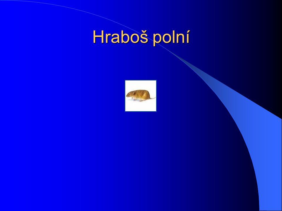 Hraboš polní Tento drobný savec bývá často zaměňován s myší, od které se liší zavalitějším tělem, menšíma ušima a kratším ocáskem.
