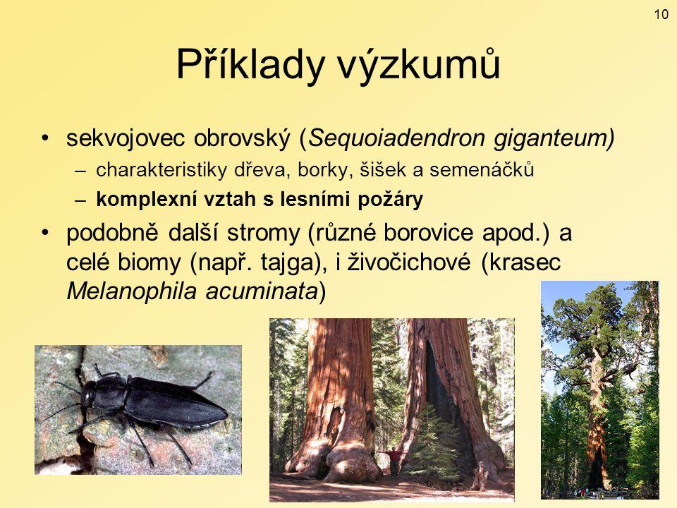 Příklady výzkumů sekvojovec obrovský (Sequoiadendron giganteum) –charakteristiky dřeva, borky, šišek a semenáčků –komplexní vztah s lesními požáry pod