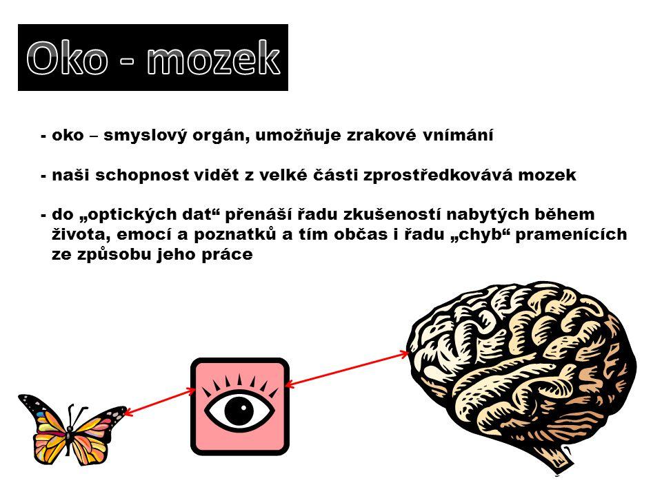 """- oko – smyslový orgán, umožňuje zrakové vnímání - naši schopnost vidět z velké části zprostředkovává mozek - do """"optických dat"""" přenáší řadu zkušenos"""