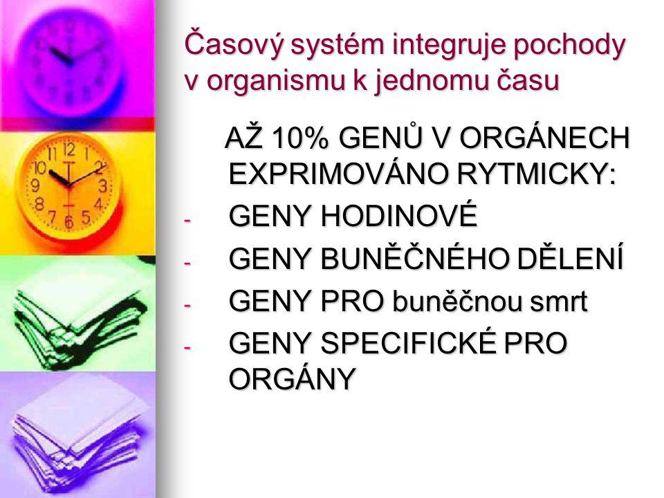 Časový systém integruje pochody v organismu k jednomu času AŽ 10% GENŮ V ORGÁNECH EXPRIMOVÁNO RYTMICKY: AŽ 10% GENŮ V ORGÁNECH EXPRIMOVÁNO RYTMICKY: -