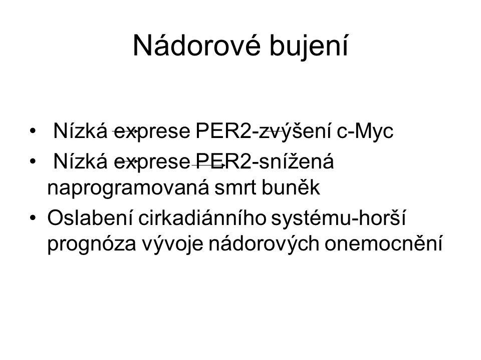 Nádorové bujení Nízká exprese PER2-zvýšení c-Myc Nízká exprese PER2-snížená naprogramovaná smrt buněk Oslabení cirkadiánního systému-horší prognóza vý