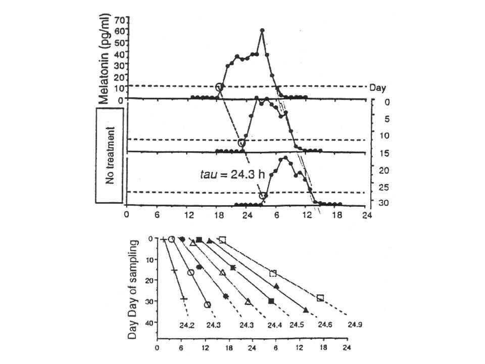 SUBJEKTIVNÍ NOC VEČER:ospalost vzrůstá melatonin vzrůstá tělesná teplota klesá RÁNO: kortizol vzrůstá melatonin klesá tělesná teplota vzrůstá SHODNE SE VŽDY SUBJEKTIVNÍ NOC se skutečnou nocí?