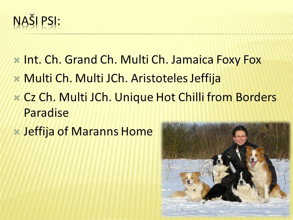  Int. Ch. Grand Ch. Multi Ch. Jamaica Foxy Fox  Multi Ch. Multi JCh. Aristoteles Jeffija  Cz Ch. Multi JCh. Unique Hot Chilli from Borders Paradise