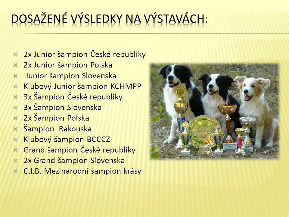  2x Junior šampion České republiky  2x Junior šampion Polska  Junior šampion Slovenska  Klubový Junior šampion KCHMPP  3x Šampion České republiky