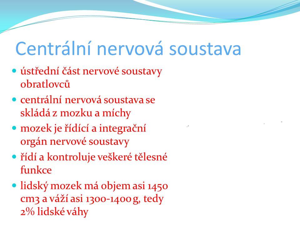Centrální nervová soustava ústřední část nervové soustavy obratlovců centrální nervová soustava se skládá z mozku a míchy mozek je řídící a integrační