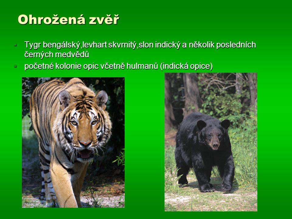 Ohrožená zvěř  Tygr bengálský,levhart skvrnitý,slon indický a několik posledních černých medvědů  početné kolonie opic včetně hulmanů (indická opice