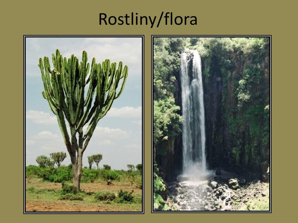 Rostliny/flora