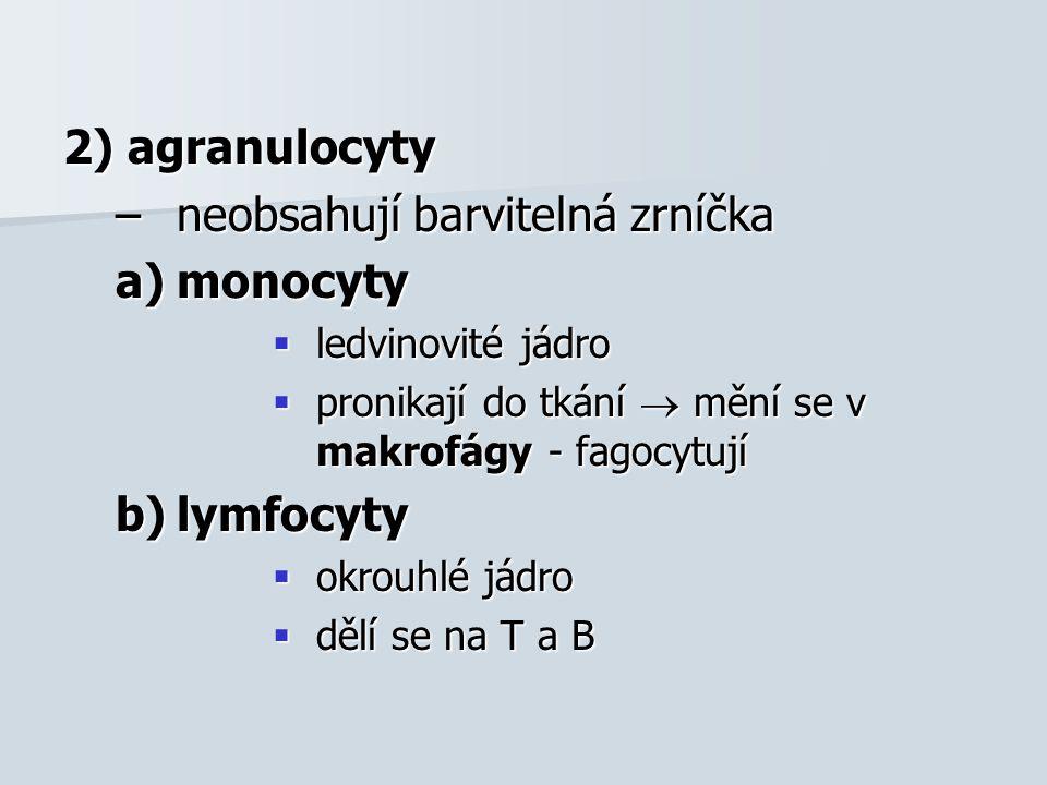 2) agranulocyty –neobsahují barvitelná zrníčka a)monocyty  ledvinovité jádro  pronikají do tkání  mění se v makrofágy - fagocytují b)lymfocyty  ok