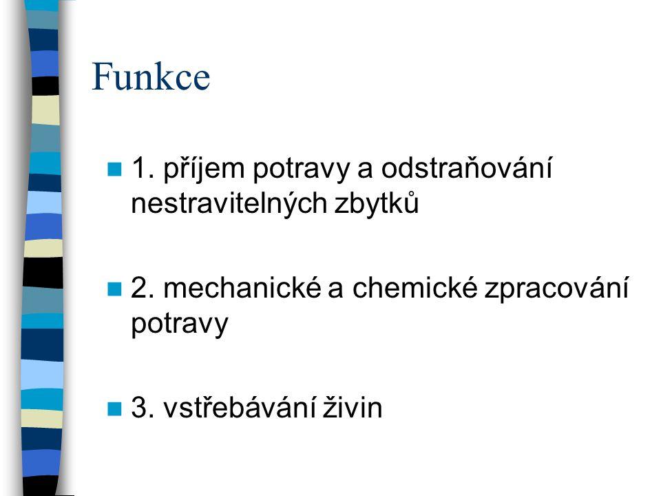 Funkce 1. příjem potravy a odstraňování nestravitelných zbytků 2. mechanické a chemické zpracování potravy 3. vstřebávání živin