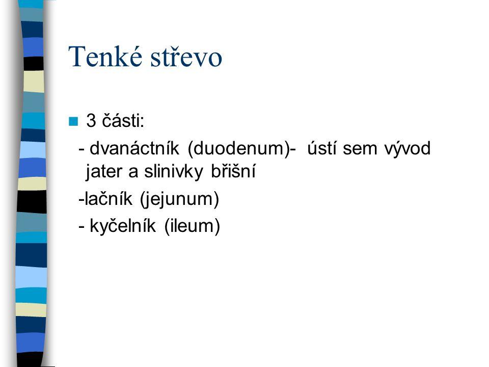 Tenké střevo 3 části: - dvanáctník (duodenum)- ústí sem vývod jater a slinivky břišní -lačník (jejunum) - kyčelník (ileum)
