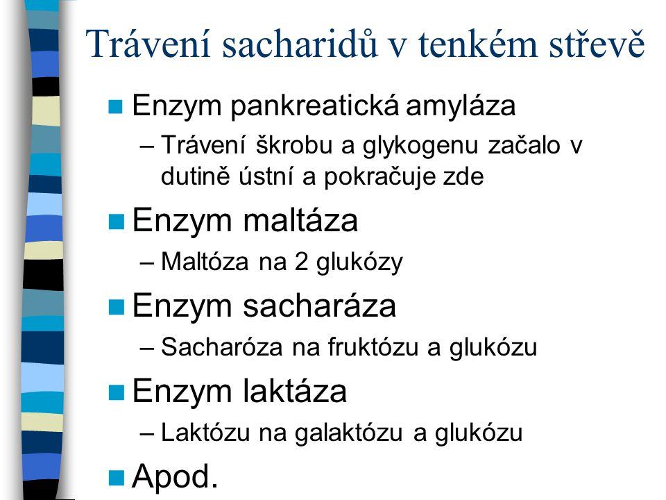 Trávení sacharidů v tenkém střevě Enzym pankreatická amyláza –Trávení škrobu a glykogenu začalo v dutině ústní a pokračuje zde Enzym maltáza –Maltóza
