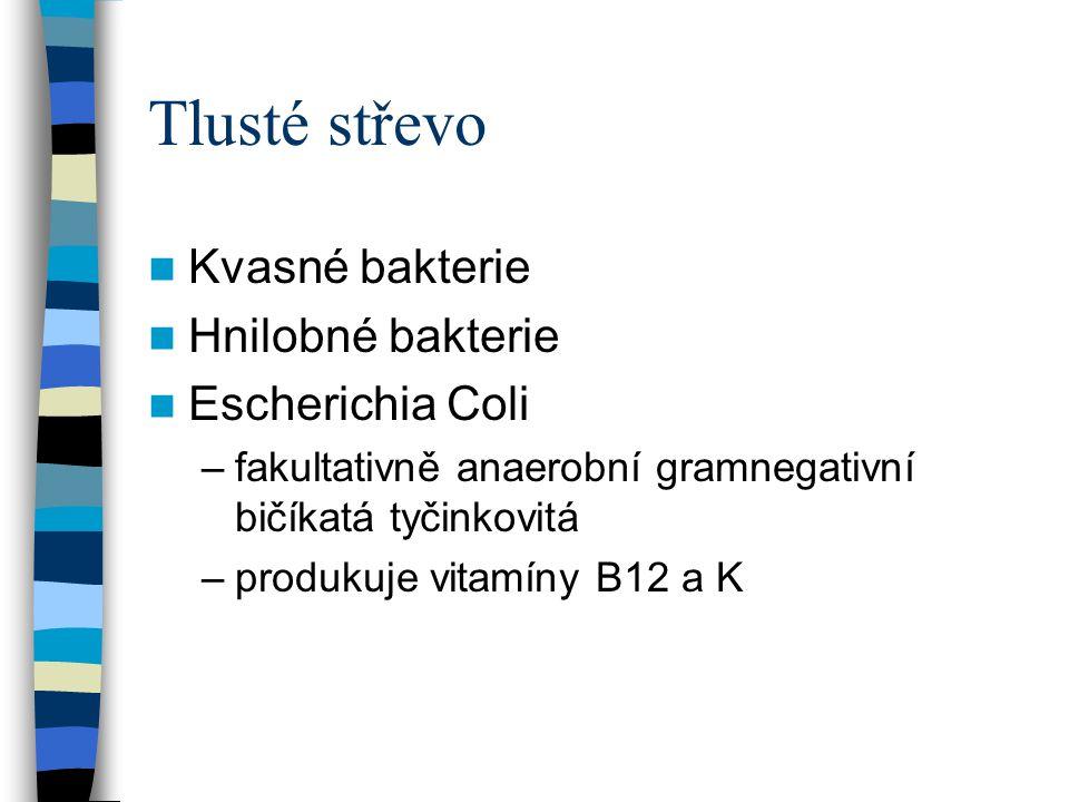 Tlusté střevo Kvasné bakterie Hnilobné bakterie Escherichia Coli –fakultativně anaerobní gramnegativní bičíkatá tyčinkovitá –produkuje vitamíny B12 a