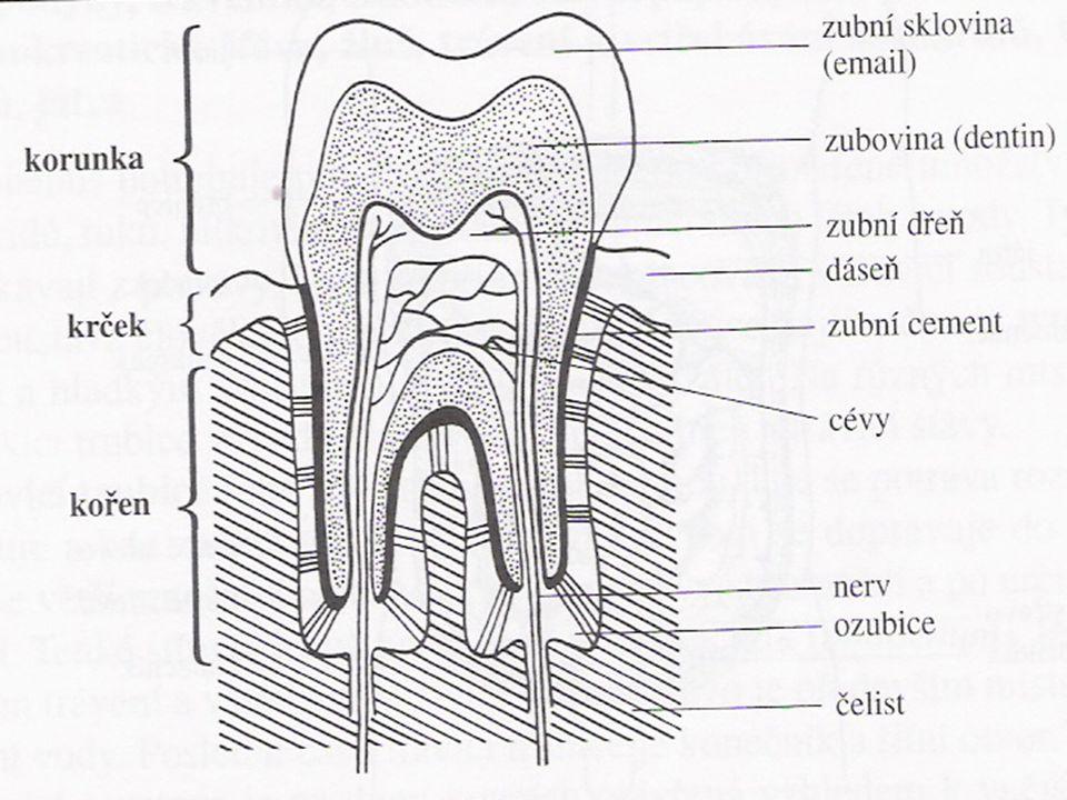 Trávení sacharidů v tenkém střevě Enzym pankreatická amyláza –Trávení škrobu a glykogenu začalo v dutině ústní a pokračuje zde Enzym maltáza –Maltóza na 2 glukózy Enzym sacharáza –Sacharóza na fruktózu a glukózu Enzym laktáza –Laktózu na galaktózu a glukózu Apod.