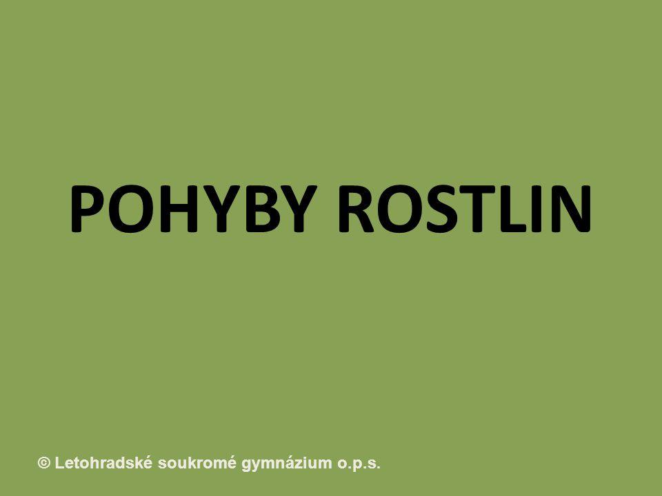 © Letohradské soukromé gymnázium o.p.s. POHYBY ROSTLIN