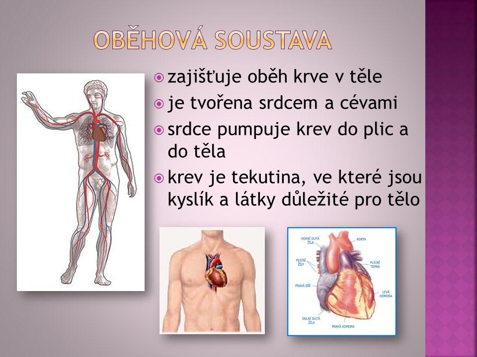 zzajišťuje oběh krve v těle jje tvořena srdcem a cévami ssrdce pumpuje krev do plic a do těla kkrev je tekutina, ve které jsou kyslík a látky
