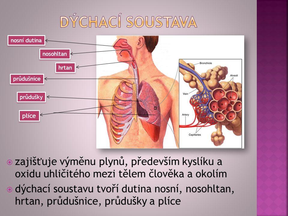 zzajišťuje výměnu plynů, především kyslíku a oxidu uhličitého mezi tělem člověka a okolím ddýchací soustavu tvoří dutina nosní, nosohltan, hrtan,