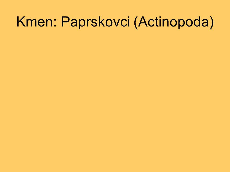 Kmen: Paprskovci (Actinopoda)