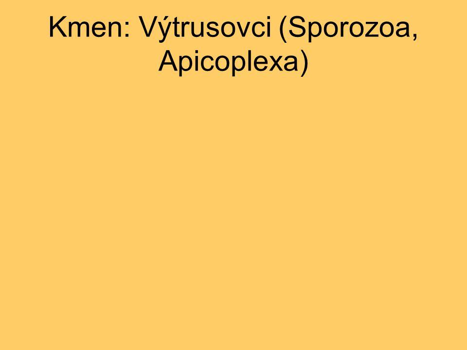 Kmen: Výtrusovci (Sporozoa, Apicoplexa)