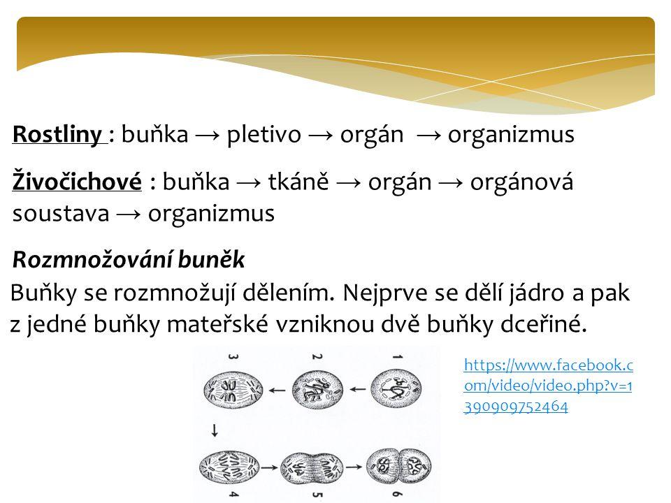 Rostliny : buňka → pletivo → orgán → organizmus Živočichové : buňka → tkáně → orgán → orgánová soustava → organizmus Rozmnožování buněk Buňky se rozmn