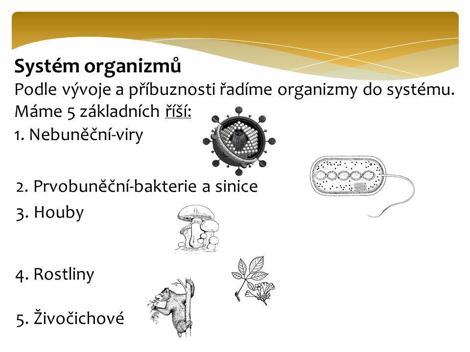 Systém organizmů Podle vývoje a příbuznosti řadíme organizmy do systému. Máme 5 základních říší: 1. Nebuněční-viry 2. Prvobuněční-bakterie a sinice 3.