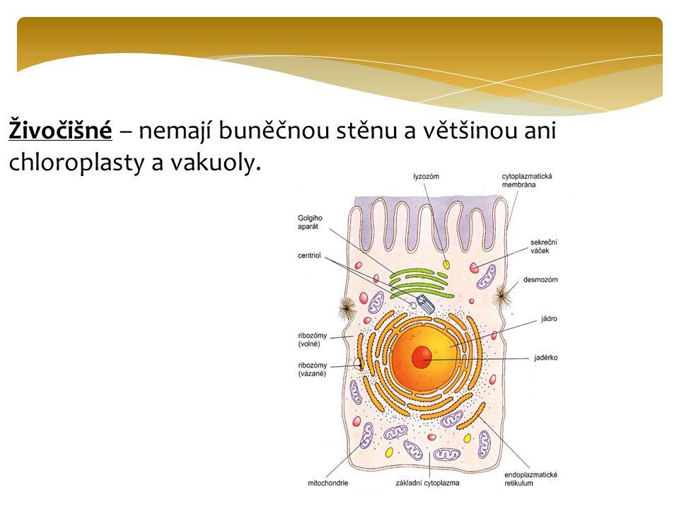 Obě buňky obsahují : Plazmatická membrána– je polopropustná a zajišťuje výměnu látek mezi buňkou a prostředím.