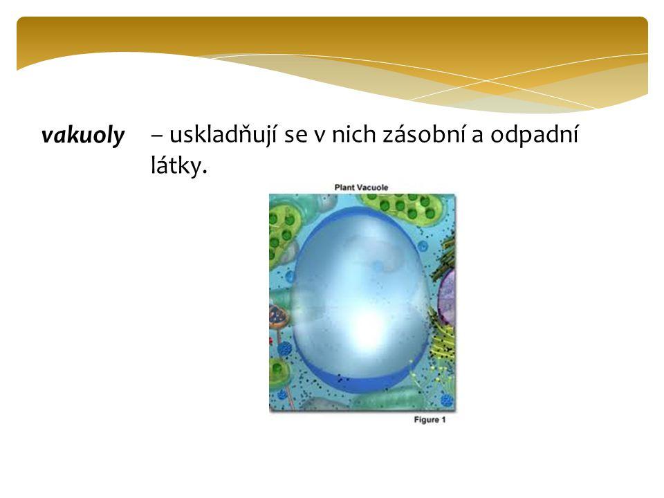 vakuoly – uskladňují se v nich zásobní a odpadní látky.