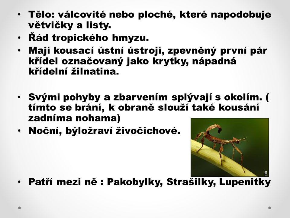 Tělo: válcovité nebo ploché, které napodobuje větvičky a listy. Řád tropického hmyzu. Mají kousací ústní ústrojí, zpevněný první pár křídel označovaný