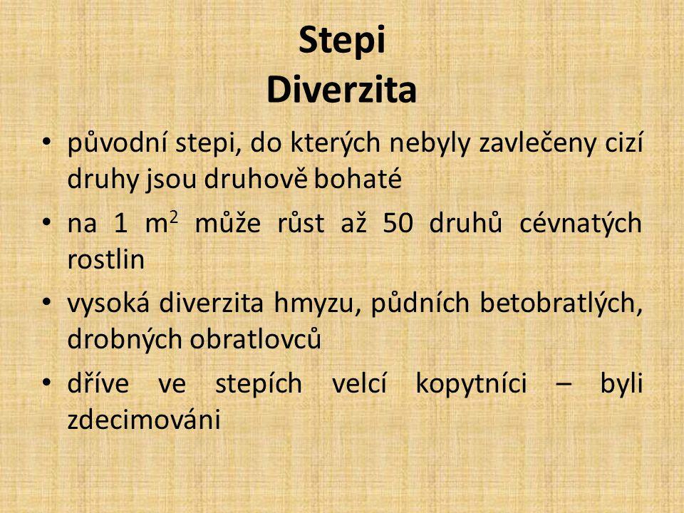 Stepi Diverzita původní stepi, do kterých nebyly zavlečeny cizí druhy jsou druhově bohaté na 1 m 2 může růst až 50 druhů cévnatých rostlin vysoká dive