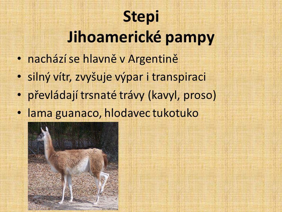 Stepi Jihoamerické pampy nachází se hlavně v Argentině silný vítr, zvyšuje výpar i transpiraci převládají trsnaté trávy (kavyl, proso) lama guanaco, h