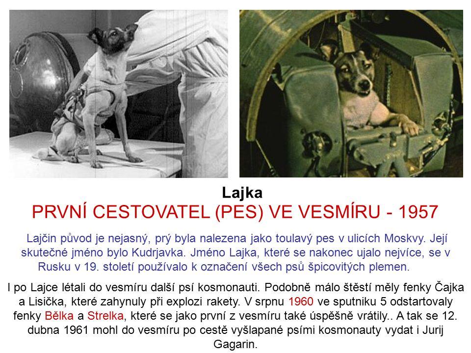 Lajka I po Lajce létali do vesmíru další psí kosmonauti.