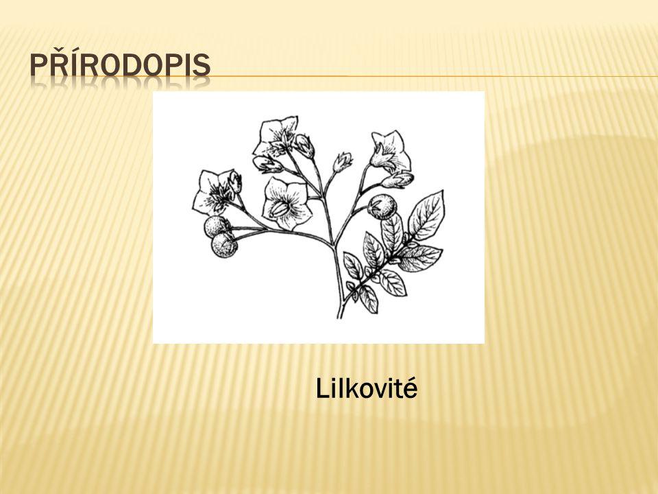 Lilkovité