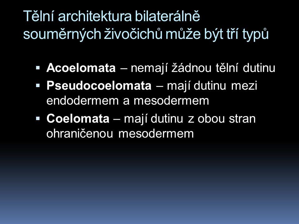 Tělní architektura bilaterálně souměrných živočichů může být tří typů  Acoelomata – nemají žádnou tělní dutinu  Pseudocoelomata – mají dutinu mezi endodermem a mesodermem  Coelomata – mají dutinu z obou stran ohraničenou mesodermem