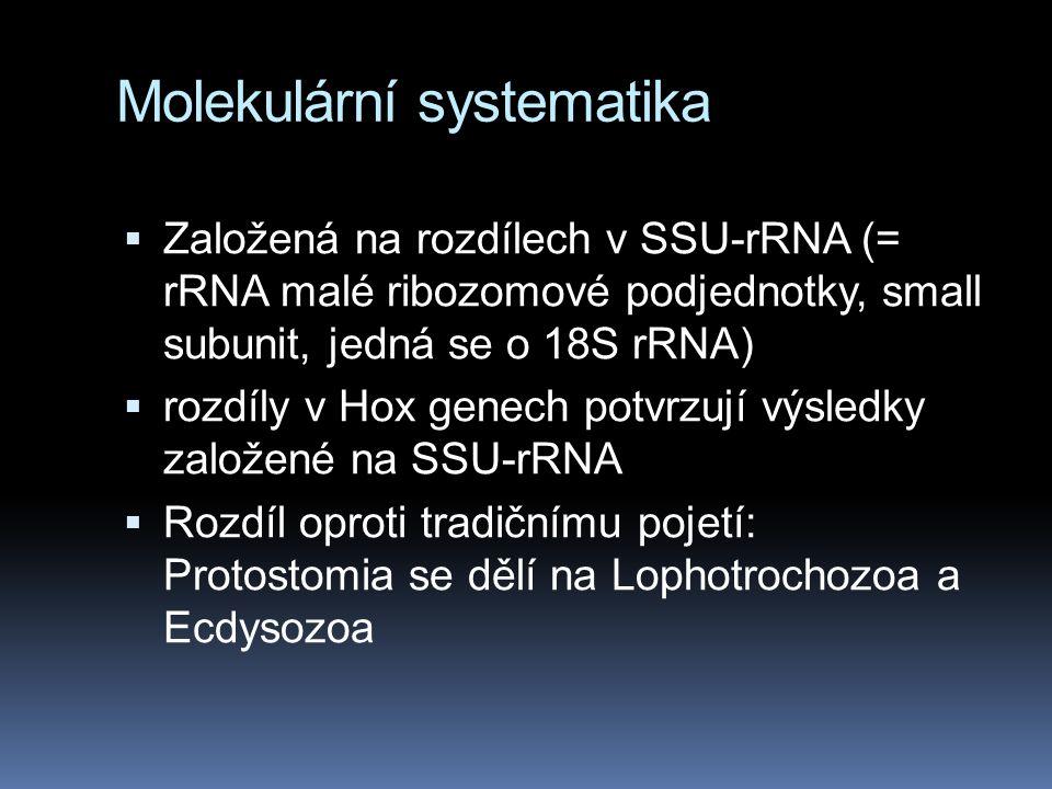 Molekulární systematika  Založená na rozdílech v SSU-rRNA (= rRNA malé ribozomové podjednotky, small subunit, jedná se o 18S rRNA)  rozdíly v Hox genech potvrzují výsledky založené na SSU-rRNA  Rozdíl oproti tradičnímu pojetí: Protostomia se dělí na Lophotrochozoa a Ecdysozoa