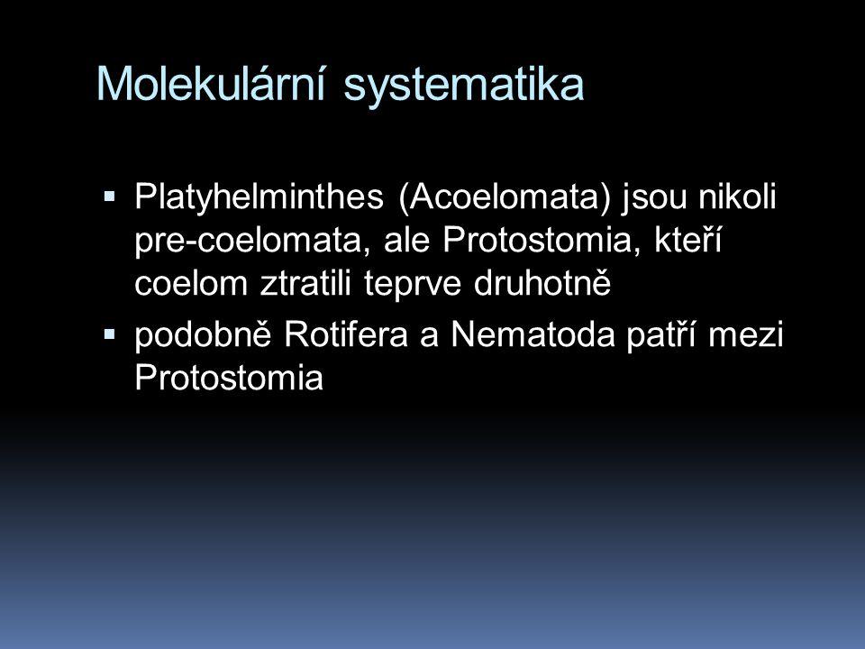 Molekulární systematika  Platyhelminthes (Acoelomata) jsou nikoli pre-coelomata, ale Protostomia, kteří coelom ztratili teprve druhotně  podobně Rotifera a Nematoda patří mezi Protostomia