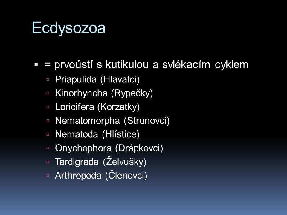 Ecdysozoa  = prvoústí s kutikulou a svlékacím cyklem  Priapulida (Hlavatci)  Kinorhyncha (Rypečky)  Loricifera (Korzetky)  Nematomorpha (Strunovci)  Nematoda (Hlístice)  Onychophora (Drápkovci)  Tardigrada (Želvušky)  Arthropoda (Členovci)