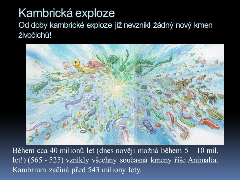 Kambrická exploze Od doby kambrické exploze již nevznikl žádný nový kmen živočichů.