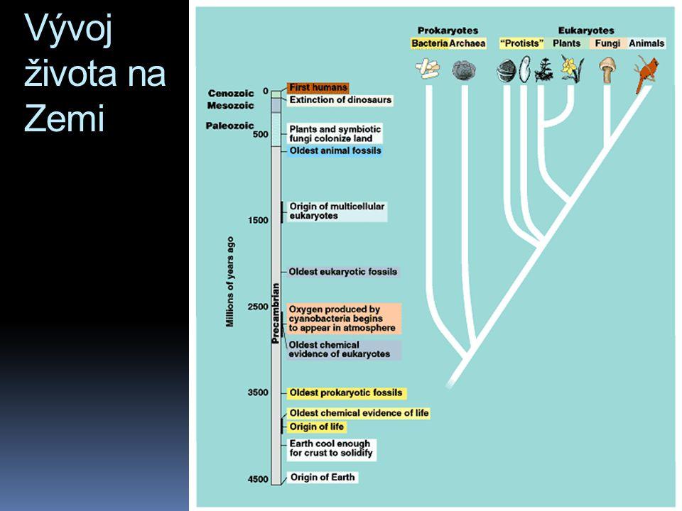 Většina kmenů říše Animalia vznikla v kambriu