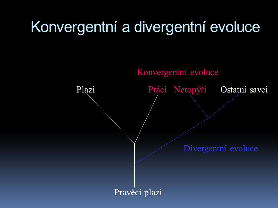 Konvergentní a divergentní evoluce Plazi Ptáci Netopýři Ostatní savci Konvergentní evoluce Pravěcí plazi Divergentní evoluce