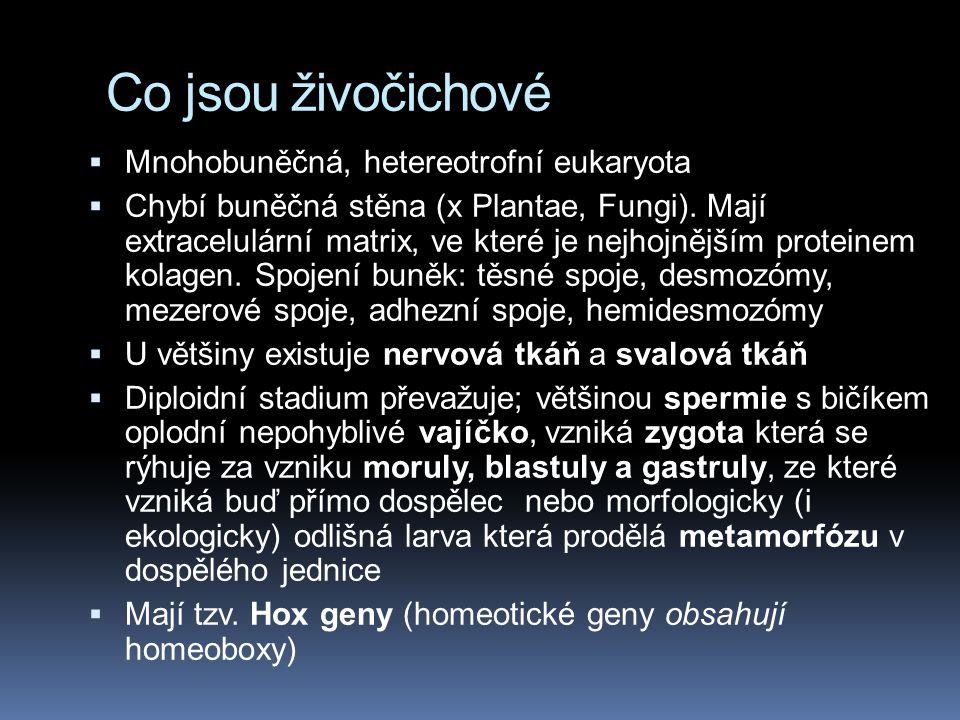 Molekulární systematika Rozdíly jsou ve skupině Protostomia