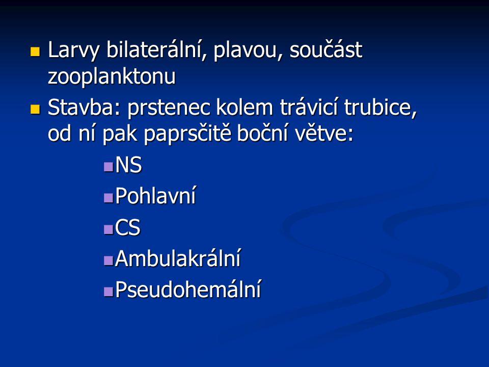 Larvy bilaterální, plavou, součást zooplanktonu Larvy bilaterální, plavou, součást zooplanktonu Stavba: prstenec kolem trávicí trubice, od ní pak papr