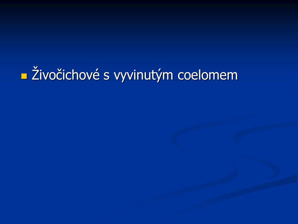 Tř í da: hadice (Ophiuroidea) Ophioderma rubicundum Ophioderma appressum Hadice obecná (Ophiura ophiura) 3cm/14 cm Středozemní moře, SV Atlantik
