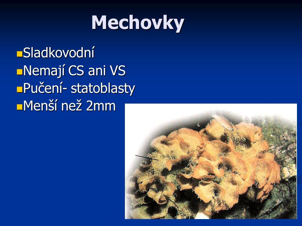 Tř í da: Mechovky (Phyllactolaemata) Lophophor podkovovitý Lophophor podkovovitý Epistom vyvinutý, Epistom vyvinutý, Sladkovodní, monomorfní kolonie Sladkovodní, monomorfní kolonie Tvoří statoblasty Tvoří statoblasty Mechovka plazivá (Plumatella repens) Mechovka hadovitá (Cristatella mucedo) 5 cm, palearktická oblast