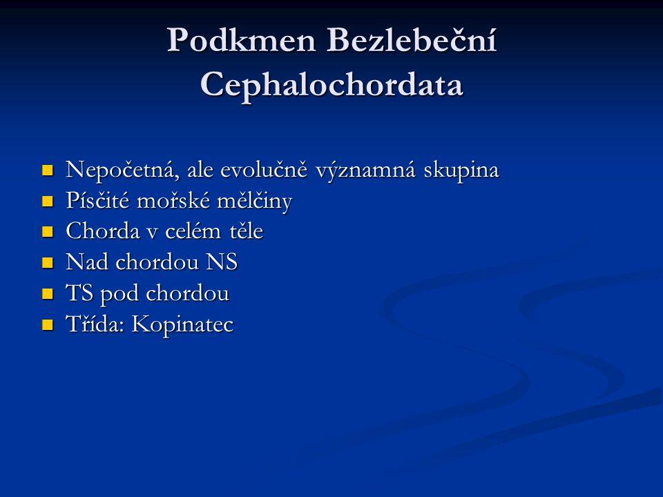 Podkmen Bezlebeční Cephalochordata Nepočetná, ale evolučně významná skupina Nepočetná, ale evolučně významná skupina Písčité mořské mělčiny Písčité mo
