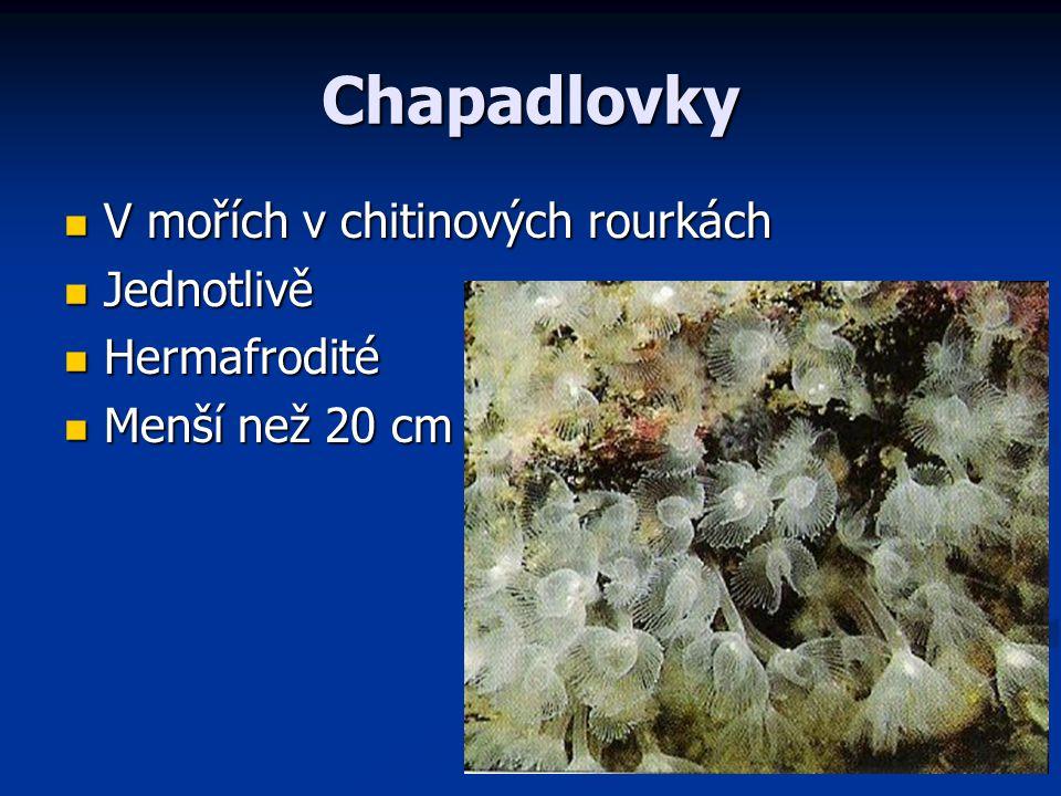 Chapadlovky V mořích v chitinových rourkách V mořích v chitinových rourkách Jednotlivě Jednotlivě Hermafrodité Hermafrodité Menší než 20 cm Menší než