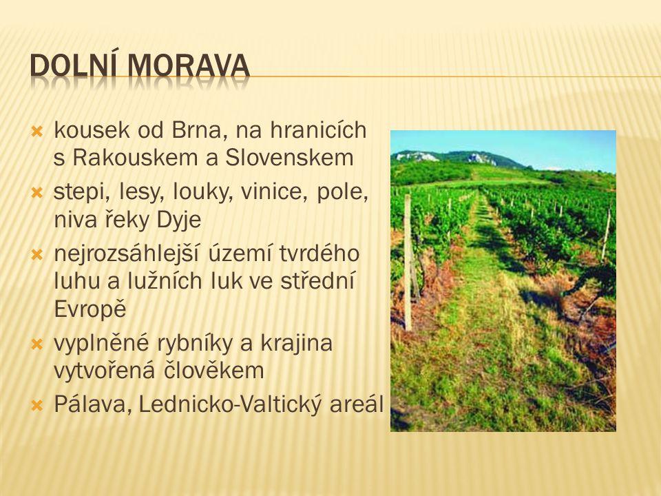  kousek od Brna, na hranicích s Rakouskem a Slovenskem  stepi, lesy, louky, vinice, pole, niva řeky Dyje  nejrozsáhlejší území tvrdého luhu a lužní