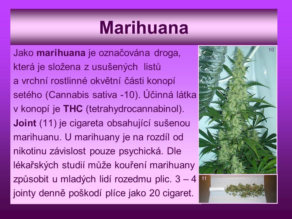 Marihuana Jako marihuana je označována droga, která je složena z usušených listů a vrchní rostlinné okvětní části konopí setého (Cannabis sativa -10).