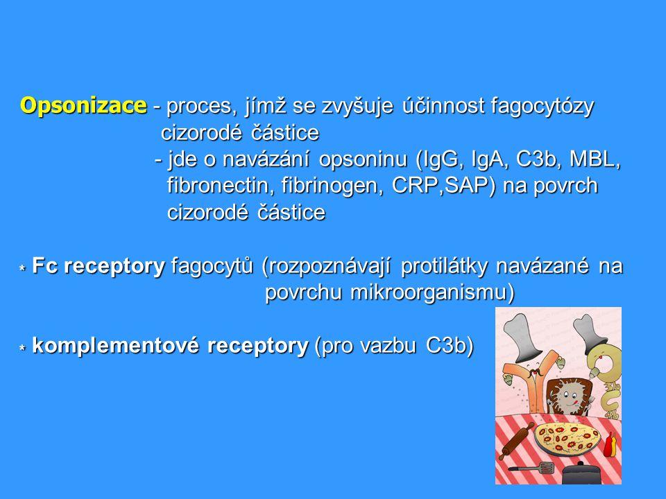 Opsonizace - proces, jímž se zvyšuje účinnost fagocytózy cizorodé částice - jde o navázání opsoninu (IgG, IgA, C3b, MBL, fibronectin, fibrinogen, CRP,