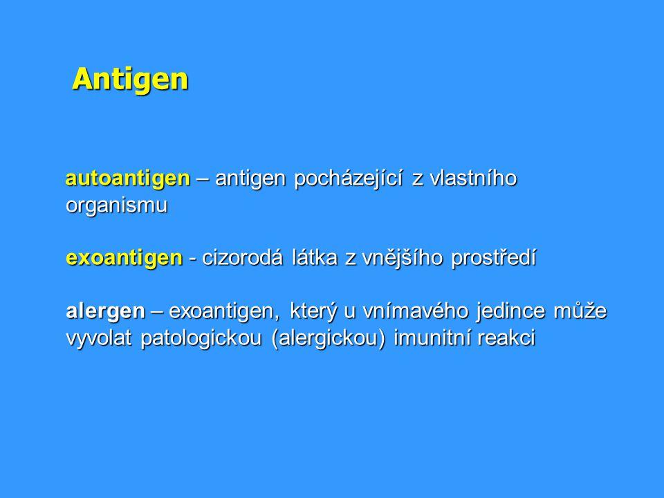 Antigen autoantigen – antigen pocházející z vlastního organismu exoantigen - cizorodá látka z vnějšího prostředí alergen – exoantigen, který u vnímavé