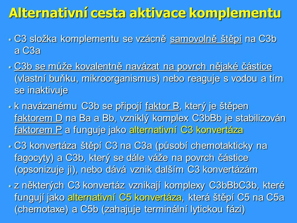 Alternativní cesta aktivace komplementu * C3 složka komplementu se vzácně samovolně štěpí na C3b a C3a * C3b se může kovalentně navázat na povrch něja